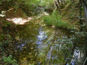 Il mulino sul fosso Grossano (2)